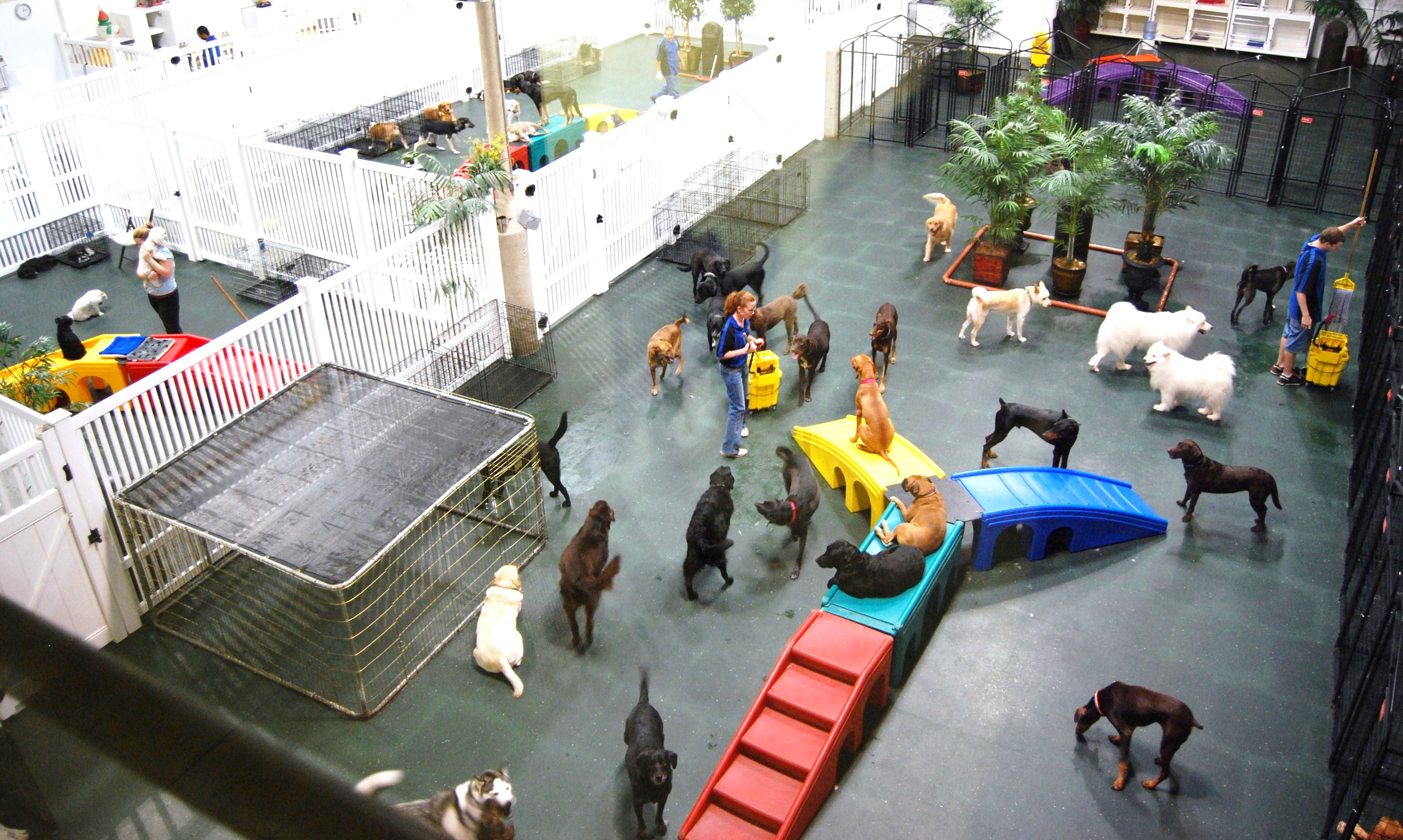 How To Find A Good Dog Daycare