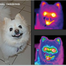 k9thermalimaging-big
