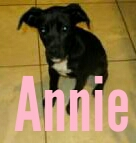 Annie-Animal of the Week Episode 17