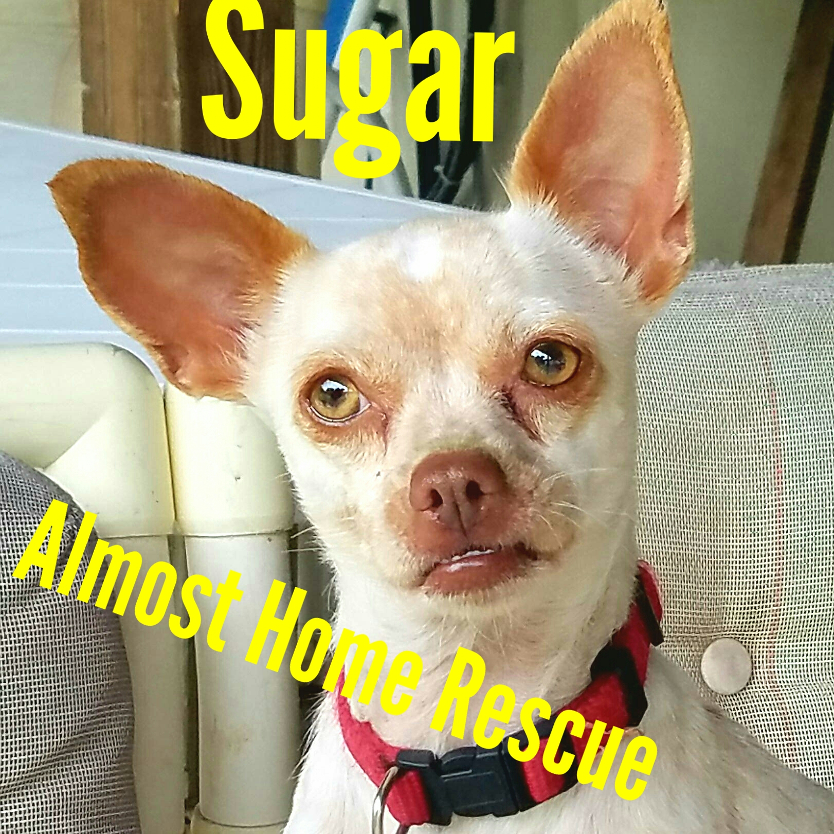 Sugar – Animal of the Week Episode 23