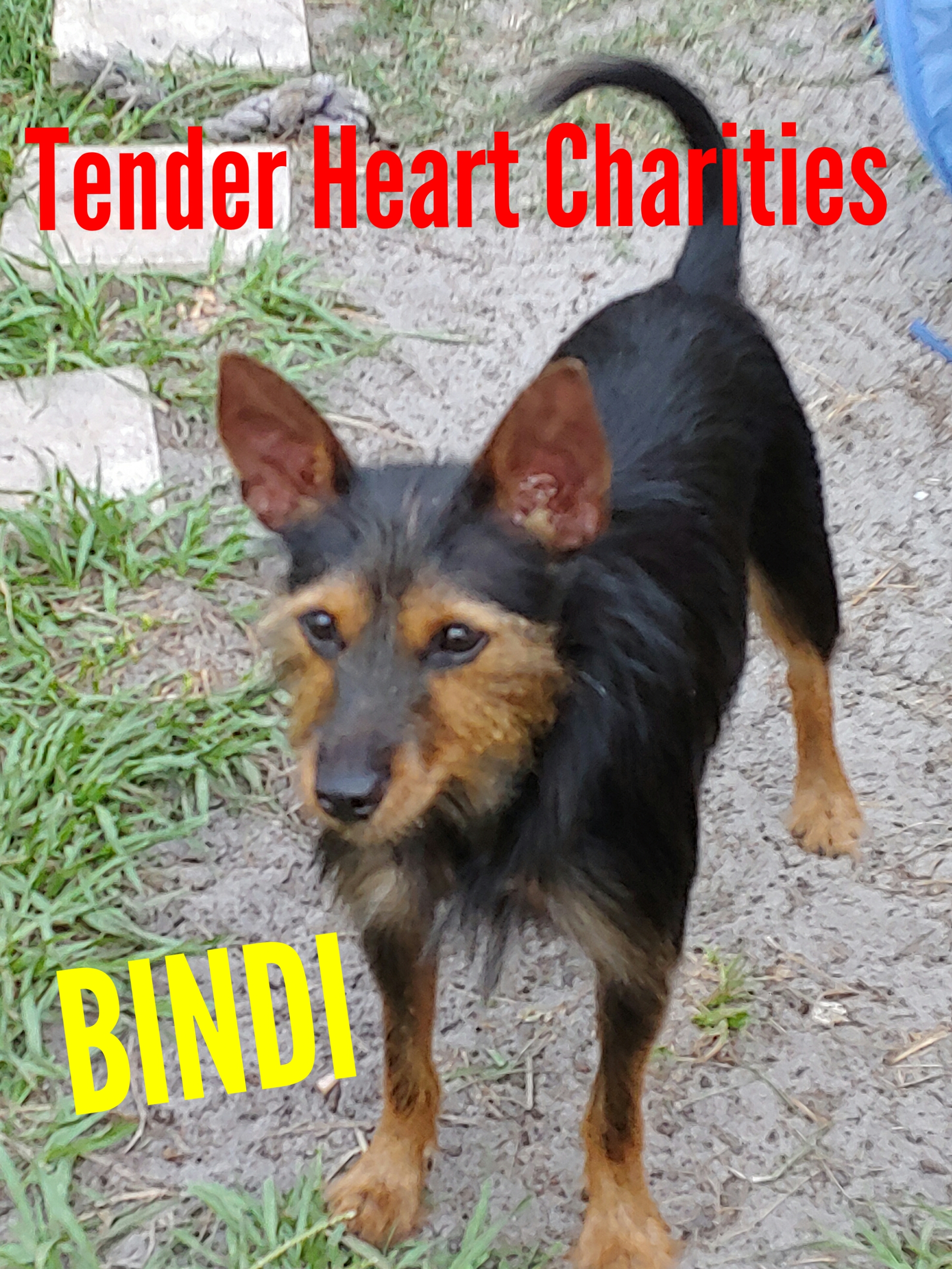 Bindi – Animal of the Week Episode 24